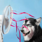 Keep Cool With No A/C